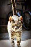 Katze schleicht stockfotografie