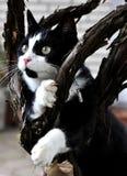 Katze schwarz-weiß mit Busch Stockbilder