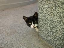 Katze Schwarzweiss stockfotos
