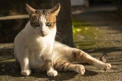 Katze sitzen auf dem Boden Lizenzfreie Stockfotografie