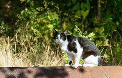 Katze sitzen auf Stahlrohr stockbilder