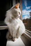 Katze sitzen durch das Fenster Lizenzfreie Stockfotos