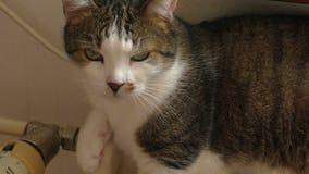 Katze sitzt stock video footage
