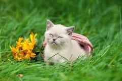 Katze sitzt auf dem grünen Rasen lizenzfreie stockfotos