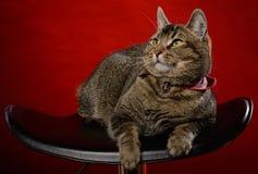 Katze sitzt auf einem schwarzen Stuhl Lizenzfreies Stockbild