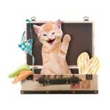 Katze sitzt das Wellenartig bewegen und das Lachen im Koffer Lizenzfreie Stockbilder