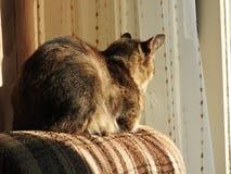 Katze am Sonnenschein Stockbild
