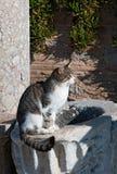 Katze am Sonnenuntergang in der alten Stadt Lizenzfreie Stockbilder