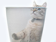 Katze-Spiel 1 Lizenzfreie Stockbilder