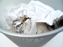 Katze-Spiel 2 lizenzfreie stockfotografie