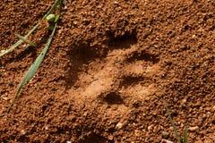 Katze-Spur im nassen Schlamm Lizenzfreie Stockfotos