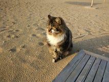 Katze in Starnd Immagine Stock Libera da Diritti