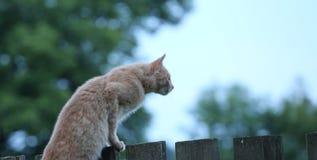 Katze starrt in den Abstand an Lizenzfreie Stockfotografie
