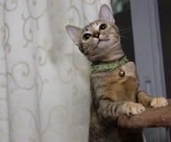 Katze steht auf dem Katzenturm Stockbilder
