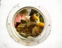 Katze steht innerhalb eines Hausbootes still Stockbild