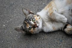 Katze steht still Stockfoto