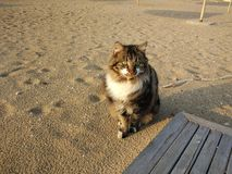 Katze in Strand Royalty Free Stock Photography