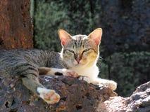Katze in Sukhothai Stockfotografie