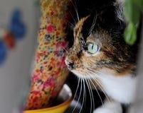 Katze, Tierporträt einer Katze mit grünen Augen Stockfoto