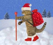 Katze trägt Weihnachtsgeschenke 2 lizenzfreies stockfoto