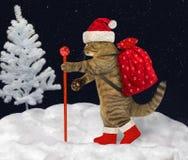 Katze trägt Weihnachtsgeschenke 3 stockfotos