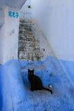 Katze in Treppe, Chefchaouen Stockfotos