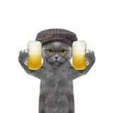Katze trinkt Bier und Gruß jemand Stockfotos