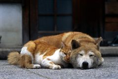 Katze u. Hund stockfotos