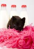 Katze u. Milch lizenzfreie stockbilder
