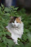 Katze umgeben durch Anlagen Lizenzfreie Stockfotos