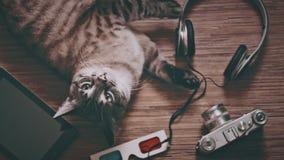 Katze umgeben durch Gegenstände für Unterhaltung stock video footage