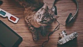 Katze umgeben durch Gegenstände für Unterhaltung stock footage