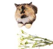 Katze und Blumen Lizenzfreies Stockfoto