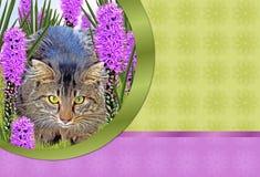 Katze und Blumen Lizenzfreies Stockbild