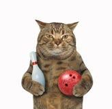 Katze und Bowlingspiel Stockfotografie