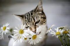Katze und Daisy Flowers Lizenzfreies Stockbild