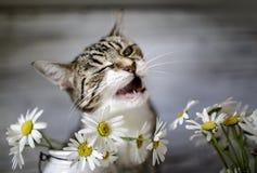Katze und Daisy Flowers Stockfoto
