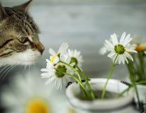 Katze und Daisy Flowers Stockfotos