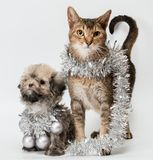 Katze und der Welpe Stockbilder