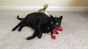 Katze und Drachen Stockbilder