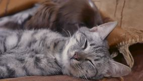 Katze und ein Hund schlafen zusammen lustiges Video der Freundschaft zuhause Katze und Hund stock video footage