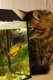 Katze und Fische Lizenzfreies Stockfoto