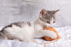 Katze und Garn Stockbild