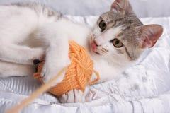 Katze und Garn Lizenzfreie Stockfotos