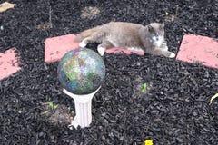 Katze und Gartenkugel Stockfotografie