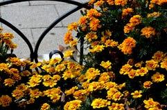 Katze und gelbe Blumen Der Blick einer Katze Lizenzfreie Stockfotografie