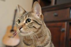 Katze und Gitarre horizontal Stockfotografie