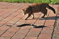 Katze- und Grasschlange Lizenzfreies Stockbild