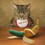 Katze und Gurke stockfotos
