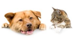Katze und Hund über weißer Fahne Stockbild